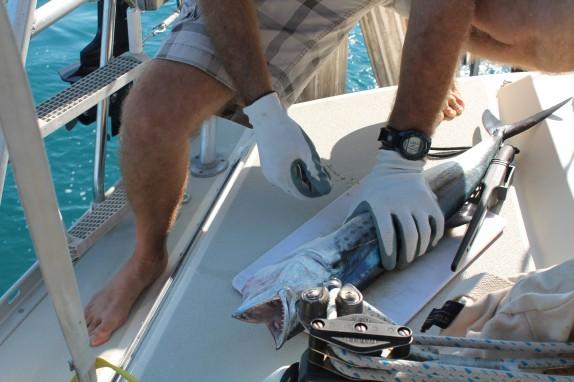 Randall filleting the Spanish Mackerel