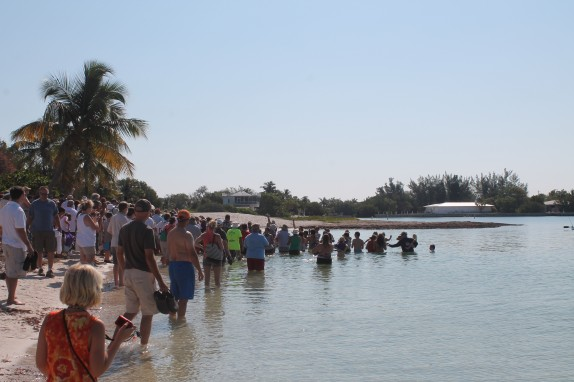 Turtle release at Sombrero Beach