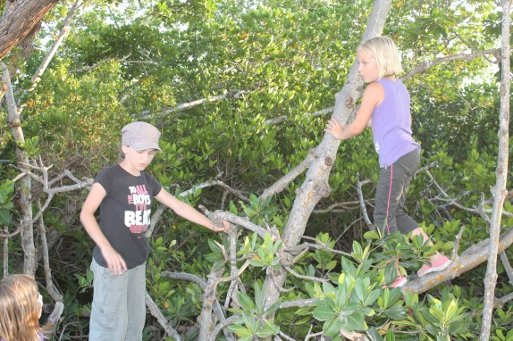 Lily and Archer testing mangrove branch strength