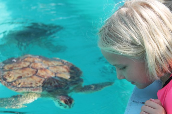 Sea turtles are endangered species so we could look but not touch