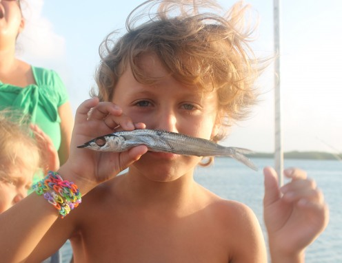 Barlito with dead and de-eyeballed pinfish