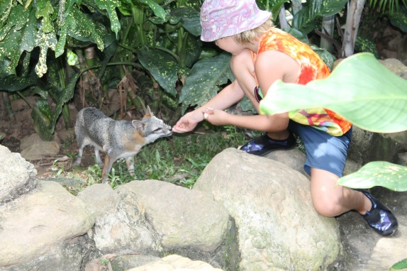 Lily feeding a rescued fox.