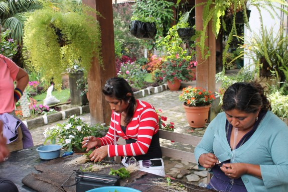 These ladies graft thousands of plants together each day.