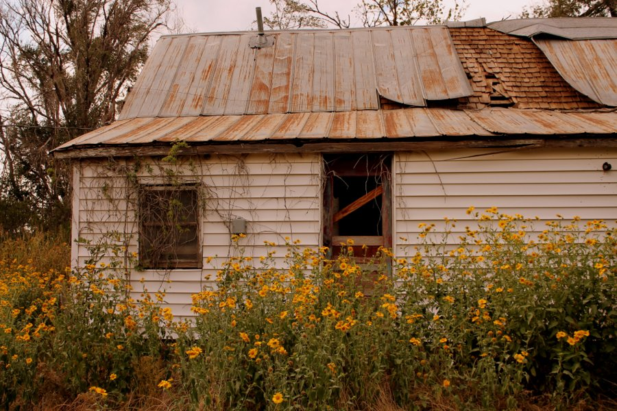 Abandoned house in sunflowers
