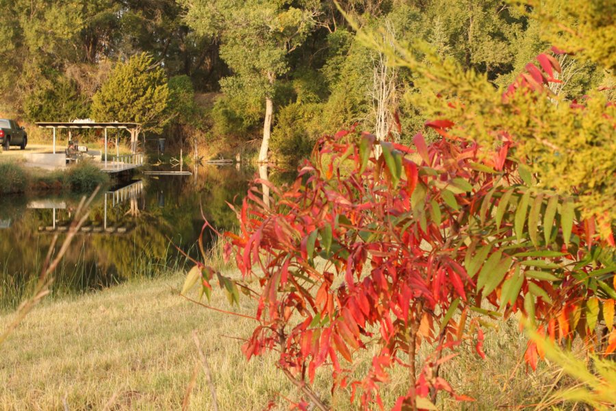 Red Sumac with Buffalo Creek Pond in the background.