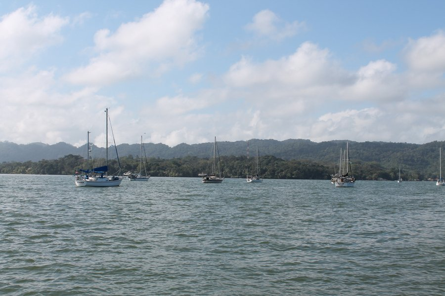 Boats in Livingston anchored and waiting to clear out.