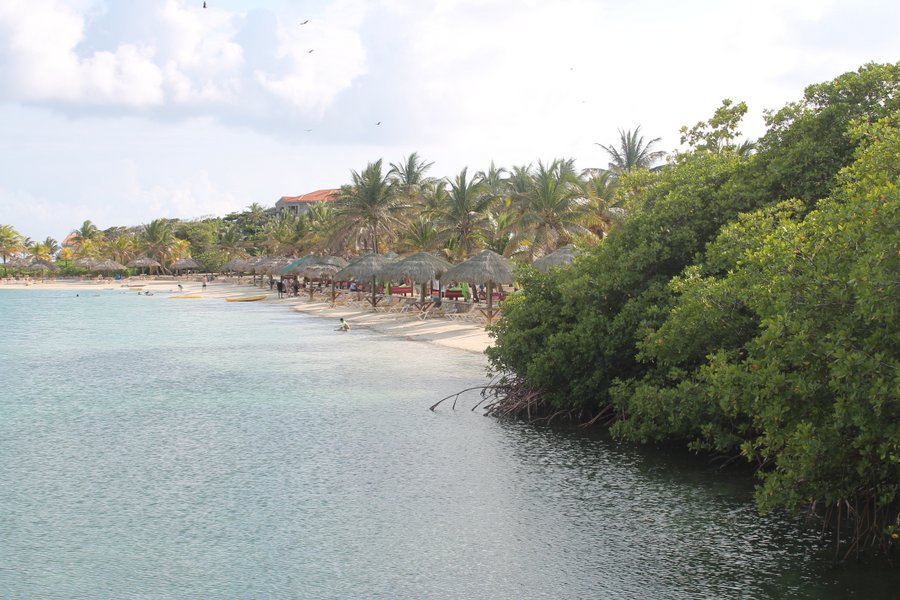 Parrot Tree Bay Resort's beach