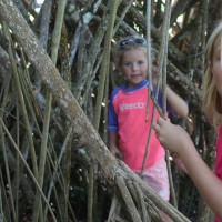 Lily and Molly playing in the prop roots of a large palm.