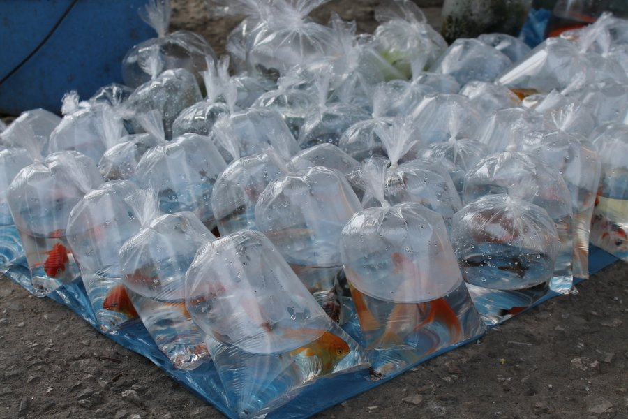 Sidewalk vendor with goldfish for sale.