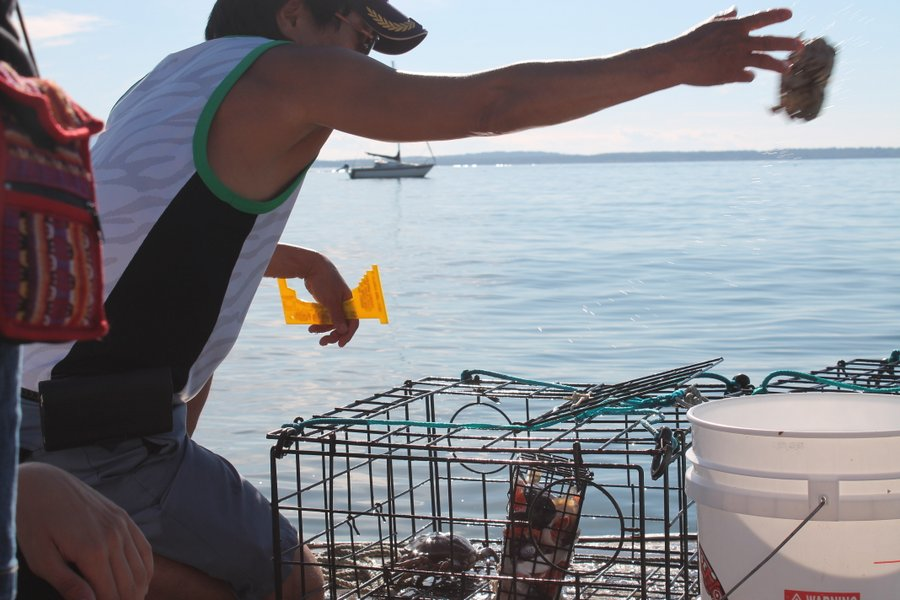 Local fisherman checking his crab pots. He got lots of crabs but they were all too small and got threw back in.