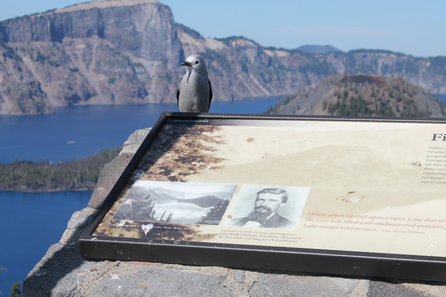 This bird presides over the historical marker at Discovery Point.