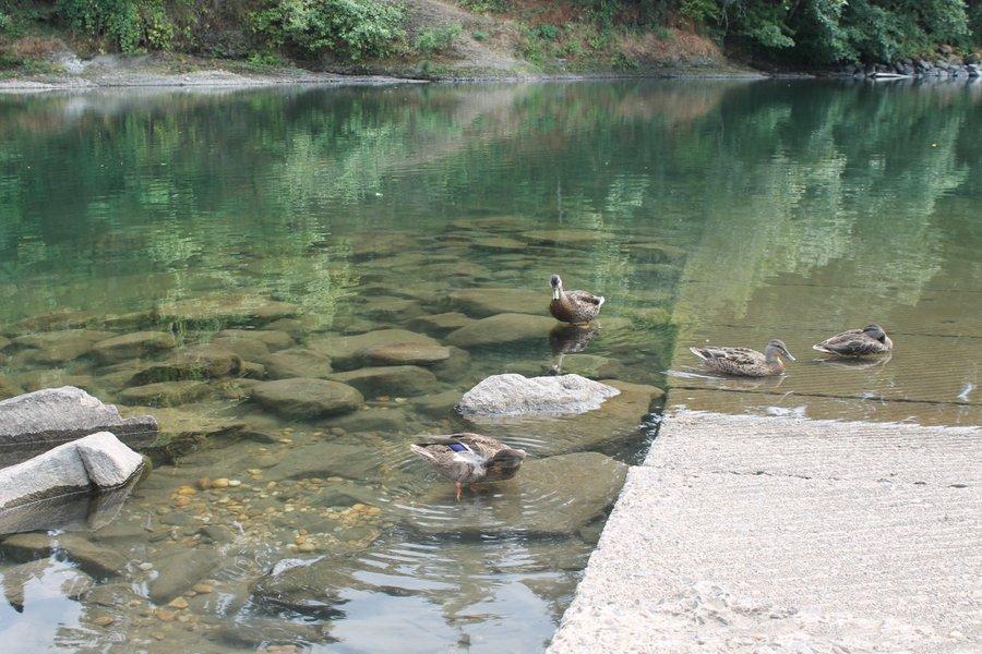 Duck watchin'