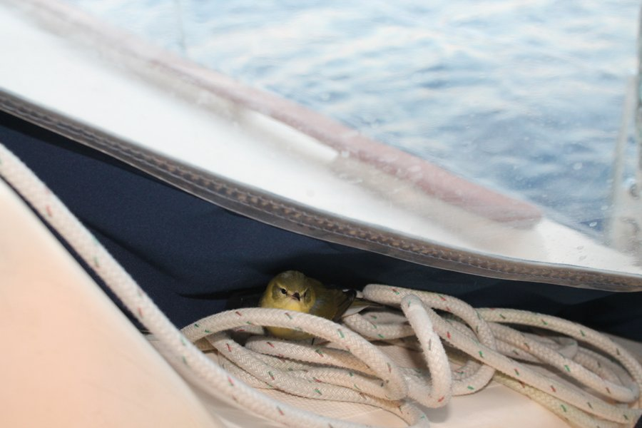 Little birdie hopped around the boat looking for a nice berth for the night.