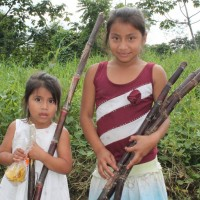 Guatemalan girls in sugar cane field